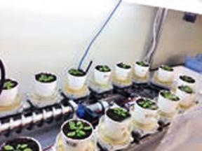 植物を一定環境で生育させる機器